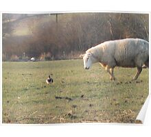 Ewe don't look like a sheep!! Poster