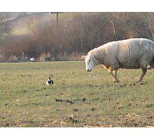 Ewe don't look like a sheep!! Photographic Print