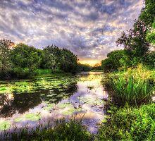 Swamp Fire by Luke Griffin