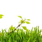 Tree small in a green grass. by larisa  fedotova