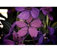 Purple Love Photographic Print