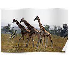 Giraffee Trifecta Poster