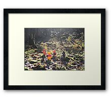 Deep in the Hundred-Acre Wood Framed Print