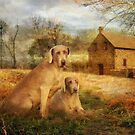 Friends in the Country by Trudi's Images