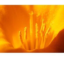 Intimate View Photographic Print