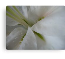 In the Depth of Lily Canvas Print
