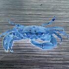 blue crab by Rishi Kant Joshi