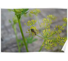 Wasp on a yellow flower Poster