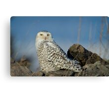 Owl at Amherst Canvas Print
