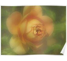 Pastel Apricot Rose Poster