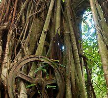 Banyan Wheel - Lenger Island, Micronesia by Alex Zuccarelli
