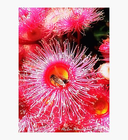 Sweet Offerings Photographic Print