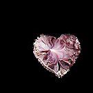 My Valentine by Linda Sannuti