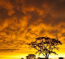 The Evening Sky by Mark Van Scyoc