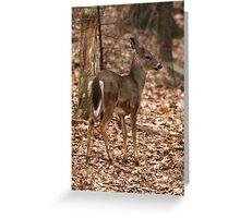 White-tailed Deer  Greeting Card
