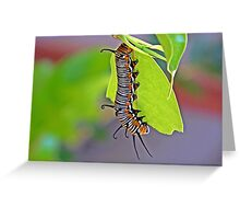 Hungry little Caterpillar Greeting Card