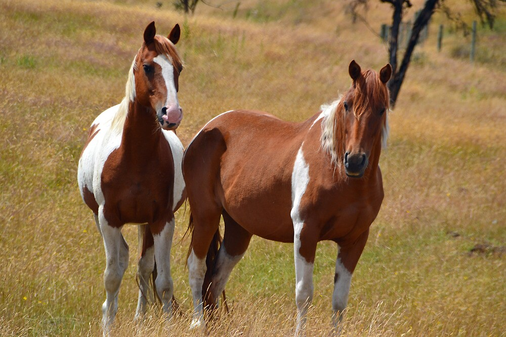 Two of a kind by Deborah Clearwater