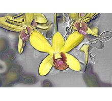 Oil Slicked Orchids Photographic Print