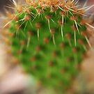 Cactus by Melissa Kirkham