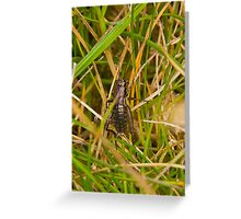 Hopper in the grass Greeting Card