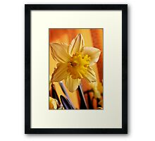 The Star of Spring! Framed Print