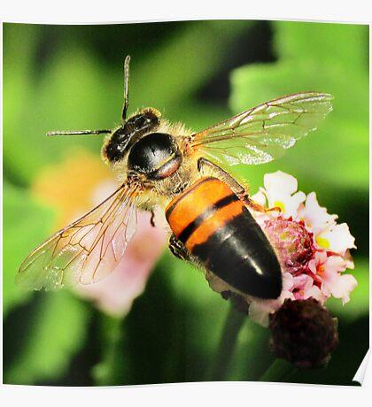 Bee Wings Poster