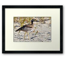 Beach Stone-Curlew (near threatened). Rainbow Beach, Queensland, Australia. Framed Print