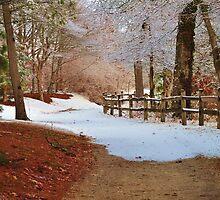 Walking Into Winter by Nicole Jeffery