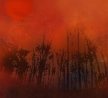 Trees in the sun by Marlies Odehnal