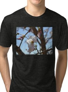 Baby Pink Cherry Blossoms Tri-blend T-Shirt