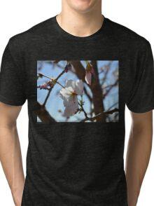 Baby Pink Cherry Blossoms Tri-blend T-Shirt