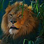 The King. by Warren  Patten