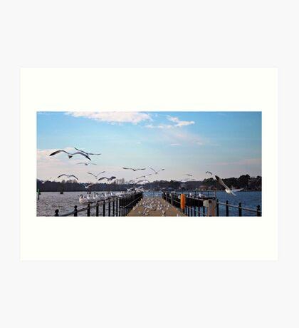 Seagulls Take Over Art Print