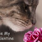 Be My Valentine Maine Coon Cat  by Elaine Hillson