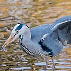Grey Heron with catch by M.S. Photography & Art