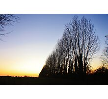 Trees - Blue, White and Red Photographic Print