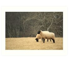 Sheep of His Pasture Art Print