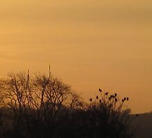 Starlings collecting to roost by millymuso