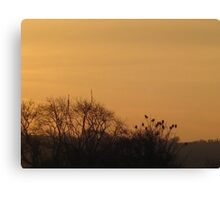 Starlings collecting to roost Canvas Print
