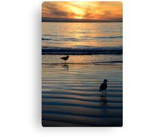 Seagulls @ Sunset Canvas Print