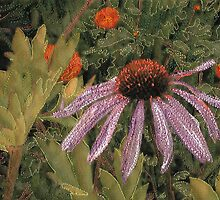 Purple Cone Flower by Shirley Wood