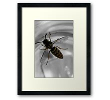 Busy busy bee ... Framed Print