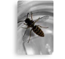 Busy busy bee ... Canvas Print