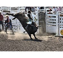 No Bull About It Photographic Print
