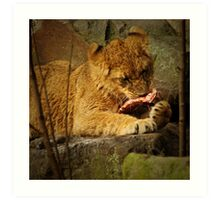 Little lion cub eating her meal Art Print
