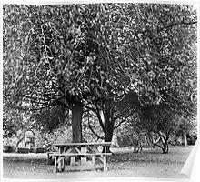 Bench in Farmleigh, Phoenix Park, Dublin Poster