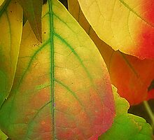 A song For Autumn by Christine Lake