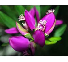Purple Flower: Original Photographic Print