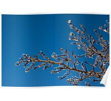 Mother Nature's Christmas Decorations - Shiny Ice Baubles  Poster