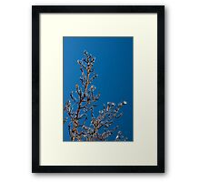 Mother Nature's Christmas Decorations - Gleaming Icy Baubles in Blue Framed Print